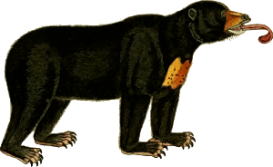 https://openclipart.org/image/300px/svg_to_png/262574/Bear2Clipped.png