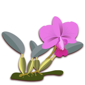 https://openclipart.org/image/300px/svg_to_png/263630/cattleya-06-walkeriana.png