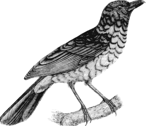 https://openclipart.org/image/300px/svg_to_png/264007/Bird7.png
