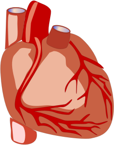 https://openclipart.org/image/300px/svg_to_png/265089/Human-heart.png