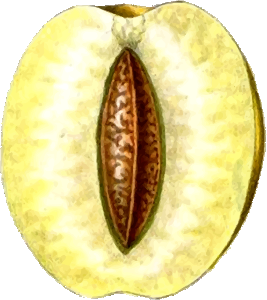 https://openclipart.org/image/300px/svg_to_png/265241/GoldenEsperenPlum2.png