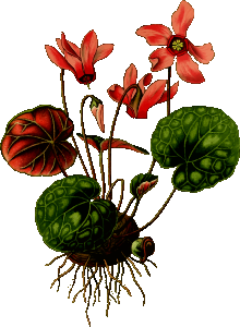 https://openclipart.org/image/300px/svg_to_png/265565/Cyclamen.png