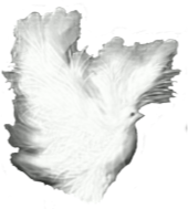 https://openclipart.org/image/300px/svg_to_png/265774/Dove-White-Shadows.png