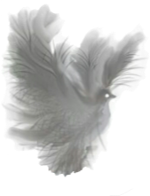 https://openclipart.org/image/300px/svg_to_png/265776/Dove-Fantasy-White-Translucent-.png