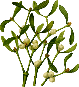 https://openclipart.org/image/300px/svg_to_png/265932/Mistletoe2.png