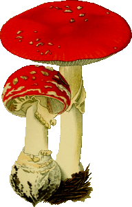 https://openclipart.org/image/300px/svg_to_png/265934/FlyAgaric.png