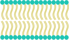 https://openclipart.org/image/300px/svg_to_png/268488/Cell-Membrane.png