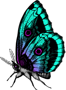 https://openclipart.org/image/300px/svg_to_png/270067/Butterfly18Colour2.png