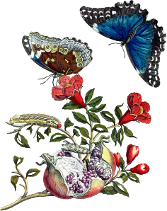 https://openclipart.org/image/300px/svg_to_png/270223/ButterfliesOnPomegranate.png