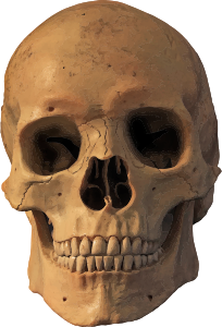 https://openclipart.org/image/300px/svg_to_png/271639/Skull17.png