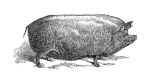 https://openclipart.org/image/300px/svg_to_png/271746/pig-pig.png