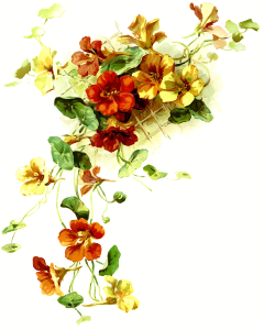 https://openclipart.org/image/300px/svg_to_png/272556/Flowers17.png