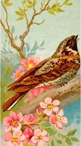 https://openclipart.org/image/300px/svg_to_png/275624/CigCardWhipPoorWill.png