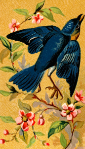 https://openclipart.org/image/300px/svg_to_png/275625/CigCardBluebird.png