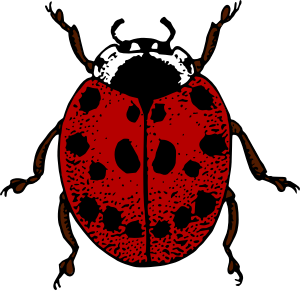 https://openclipart.org/image/300px/svg_to_png/275631/LadybirdColour.png