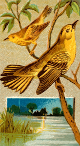 https://openclipart.org/image/300px/svg_to_png/275679/CigCardWoodWarbler.png