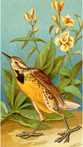 https://openclipart.org/image/300px/svg_to_png/275681/CigCardMeadowLark.png