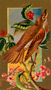 https://openclipart.org/image/300px/svg_to_png/276070/CigCardWoodThrush.png