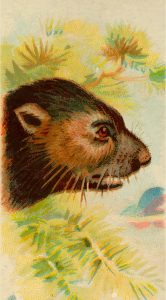 https://openclipart.org/image/300px/svg_to_png/276218/CigCardTasmanianDevil.png