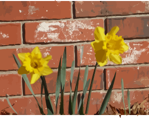 https://openclipart.org/image/300px/svg_to_png/276344/daffodils-03.png