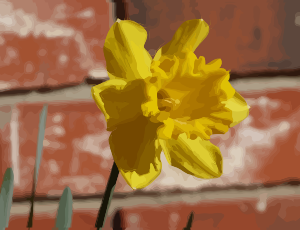 https://openclipart.org/image/300px/svg_to_png/276347/daffodils-05.png