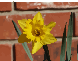https://openclipart.org/image/300px/svg_to_png/276348/daffodils-06.png