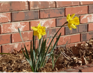 https://openclipart.org/image/300px/svg_to_png/276349/daffodils-07.png