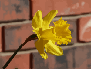 https://openclipart.org/image/300px/svg_to_png/276350/daffodils-08.png