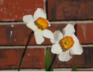 https://openclipart.org/image/300px/svg_to_png/276351/daffodils-09.png