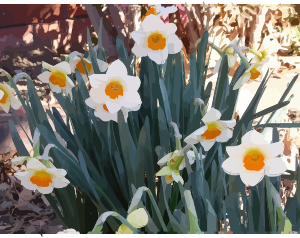 https://openclipart.org/image/300px/svg_to_png/276352/daffodils-10.png