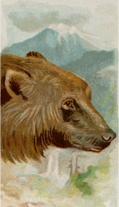 https://openclipart.org/image/300px/svg_to_png/276389/CigCardGrizzlyBear.png