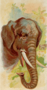 https://openclipart.org/image/300px/svg_to_png/276394/CigCardElephant.png