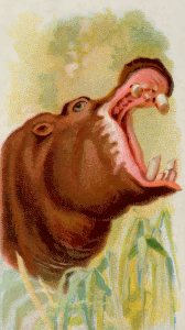 https://openclipart.org/image/300px/svg_to_png/276405/CigCardHippopotamus.png