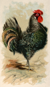 https://openclipart.org/image/300px/svg_to_png/278639/CigCardBlackFrizzledFowl.png