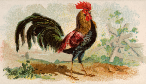 https://openclipart.org/image/300px/svg_to_png/278641/CigCardBrownLeghorn.png