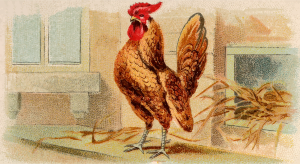https://openclipart.org/image/300px/svg_to_png/278880/CigCardGoldLacedBantam.png