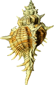 https://openclipart.org/image/300px/svg_to_png/280524/Seashell43.png