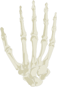 https://openclipart.org/image/300px/svg_to_png/281963/Hand-Skeleton.png