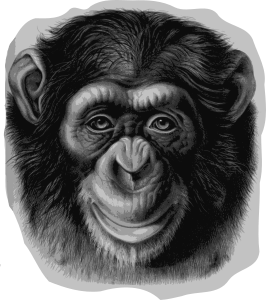 https://openclipart.org/image/300px/svg_to_png/282170/chimpanzeehead.png