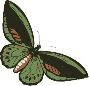 https://openclipart.org/image/300px/svg_to_png/282171/greenbutterfly.png