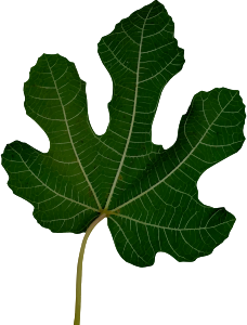 https://openclipart.org/image/300px/svg_to_png/282773/Leaf10.png