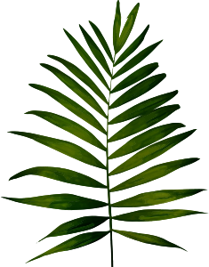 https://openclipart.org/image/300px/svg_to_png/282774/Fern2.png