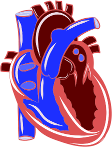 https://openclipart.org/image/300px/svg_to_png/285138/Colorful-Realistic-Heart-Illustration.png