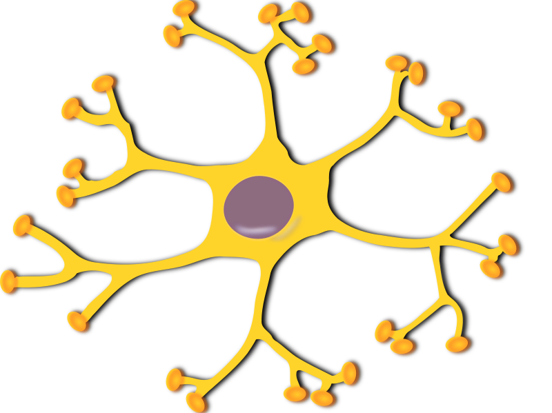 neuron-interneuron 2