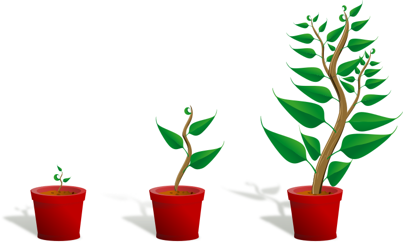 Green plant in its pot in three different phases of growth