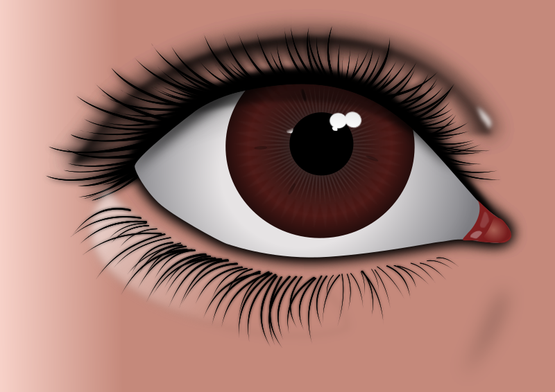 Realistic Brown Eye