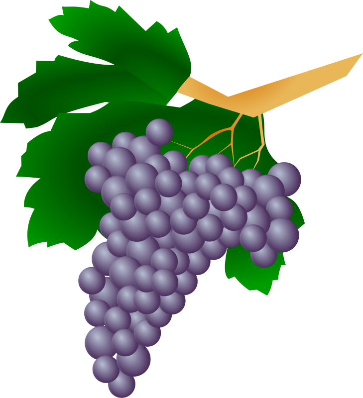 Grapes - Raisin