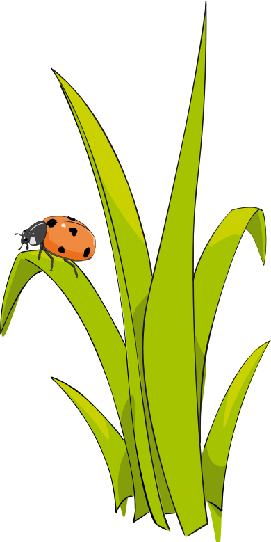 Coccinelle sur brin d-herbe - Ladybird on blade of grass.