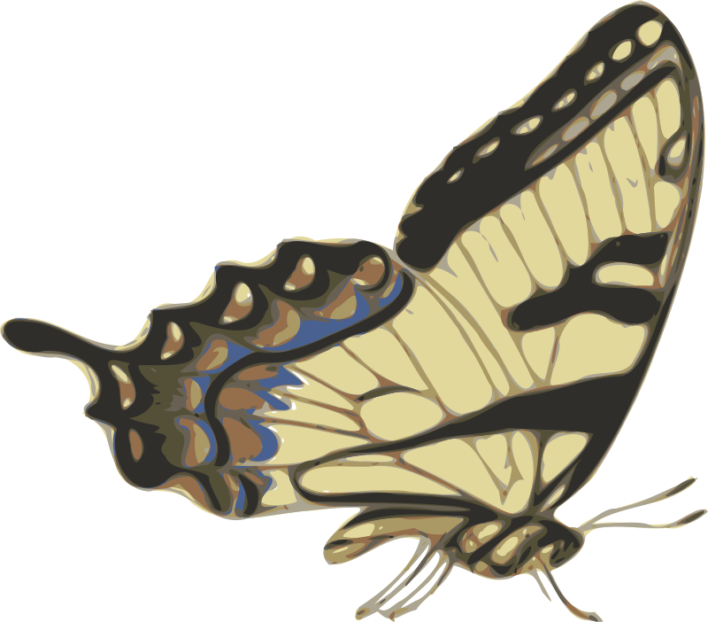 butterfly (papilio turnus) side view