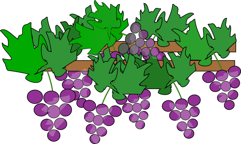 Grapes Growing for Wine
